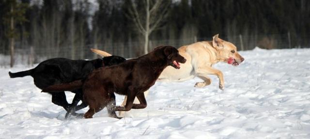 3-dogs-dec2.jpg