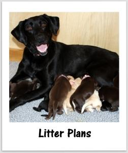 litter plans