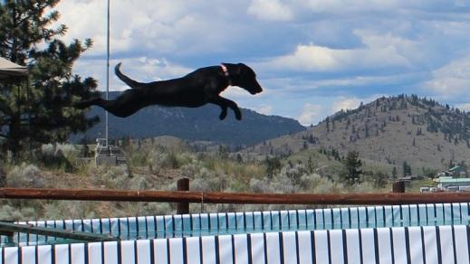 viper jump3
