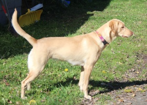lassie-stack-9-months