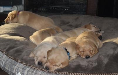 missie pups d16