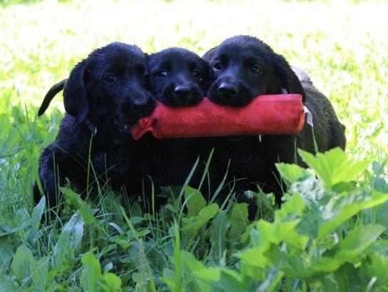 pups a11p3